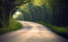 Картинка дорога, лето, листья, деревья, природа