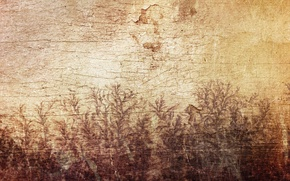 Картинка листья, трещины, стена, дерево, узор, рисунок, растения, Sirius-sdz, деревяшка