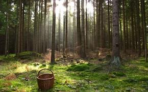 Обои Артштеттен-Пёбринг, корзина, деревья, трава, лес, Австрия, мох
