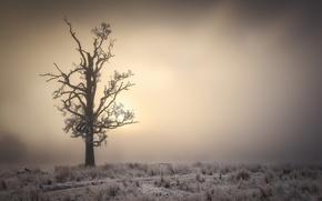 Обои утро, туман, дерево