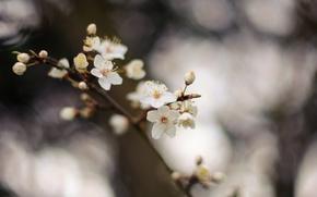 Картинка цветы, природа, дерево, ветка, весна, цветки