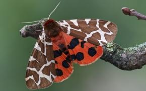 Картинка узор, бабочка, крылья, ветка, насекомое, обои от lolita777
