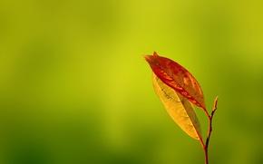 Обои зелень, осень, Gentle Caress, листья