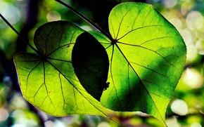 Картинка листья, макро, деревья, зеленый, фон, green, widescreen, обои, wallpaper, форма, листочки, широкоформатные, background, полноэкранные, HD …