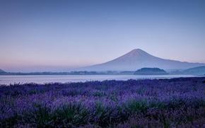 Картинка поле, цветы, природа, озеро, гора, утро, вулкан, Япония, Фудзи, лаванда, Фудзияма