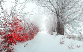 Картинка утро, merry christmas, зима, листья, дерево, аллея, снег, Пейзажи, природа, туман, панорама, кусты, new year, ...