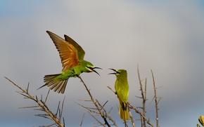 Обои птицы, игра, крылья, ветка, клюв