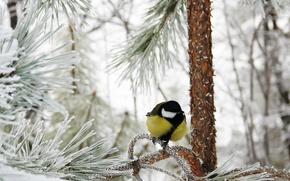 Картинка зима, иней, лес, снег, синичка