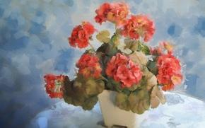 Картинка цветок, вазон, герань