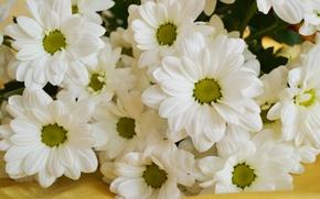 Картинка цветы, ромашки, букет, шелк, аромат, дубки