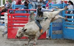 Картинка спорт, бык, Small town rodeo