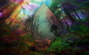 Картинка лес, деревья, линии, абстракция, цвет