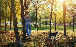 Обои осень, листья, девушка, солнце, деревья, парк, джинсы, майка, фигура, прическа, блондинка, поводок, хаски, photographer, тельняшка, ...