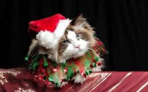 Картинка christmas, cat, cute, costume
