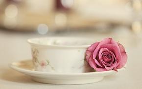 Картинка роза, чашка, Elegance