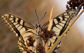 Картинка стебли, бабочка, крылья, ветка, усики