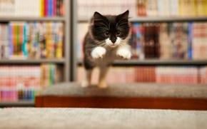 Обои кошка, фон, прыжок