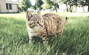 Картинка cat, iran, ardabil