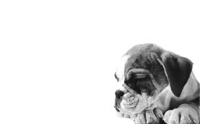 Картинка спит, щенок, черно-белое, нарисованный