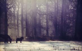 Картинка зима, лес, солнце, снег, туман, лошадь, пони