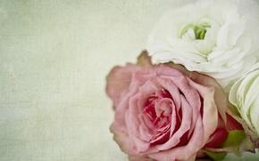 Картинка макро, роза, текстура, бутоны, ранункулюс