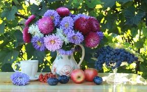 Обои натюрморт, фрукты, сливы, астры, яблоки, виноград