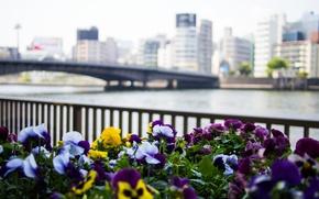 Обои цветы, мост, city, город, река, здания, ограда, Япония, Токио, Tokyo, Japan, анютины глазки, river, bridge, ...