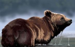 Картинка вода, капли, медведь, арт, мех