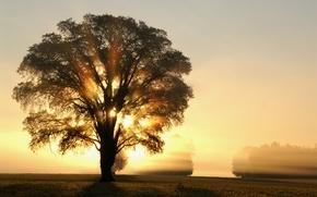 Картинка поле, солнце, лучи, свет, деревья, дерево, рассвет, Утро