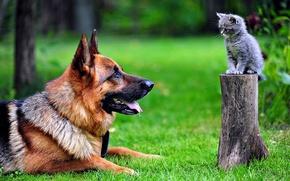 Обои cat, dog, park