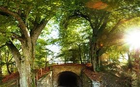 Картинка лес, деревья, туннель, холм