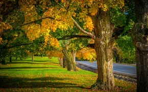 Обои nature, trees, leaves, colorful, road, path, autumn, fall, colors