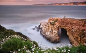 Картинка море, цветы, птицы, природа, скалы, выдержка