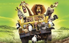 Обои настроения, мультфильм, саванна, Мадагаскар, Madagascar