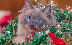 Картинка кошка, взгляд, праздник, гирлянды