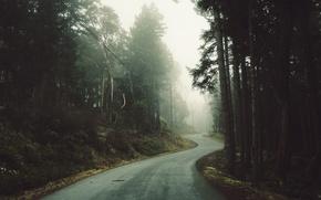 Картинка дорога, лес, деревья, туман, столбы, провода, мгла