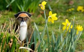Картинка трава, цветы, природа, обезьяна