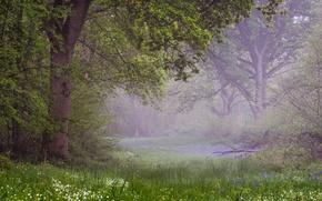 Картинка лес, пррода, весна