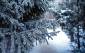 Обои природа, ели, сосны, зима, снег
