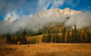 Картинка осень, облака, деревья, горы, природа, туман, ель, хвойные