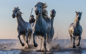 Картинка вода, брызги, кони, лошади