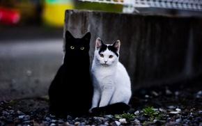 Картинка взгляд, фон, коты