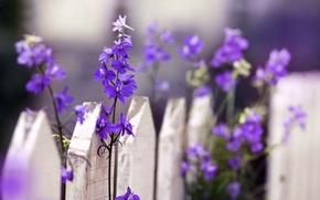 Картинка макро, цветы, природа, забор, ограда, ограждение, цветочки, flowers