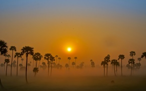 Картинка небо, солнце, туман, пальмы, рассвет