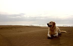 Картинка песок, пляж, небо, собака, горизонт, пес