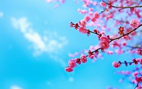 Обои небо, дерево, ветка, цветение, весна