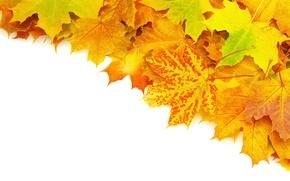 Картинка осень, листья, прожилки, яркость, ворох