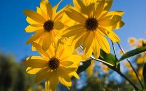 Картинка цветок, небо, лепестки
