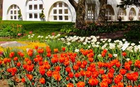 Картинка трава, деревья, цветы, дом, камни, газон, сад, дорожка, тюльпаны, разноцветные
