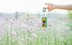 Обои лето, Fuji film, camera